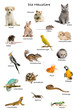Collage of pets and animals in German