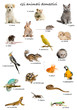 Collage of pets and animals in Italian