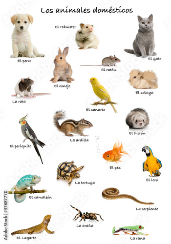 Collage of pets and animals in Spanish