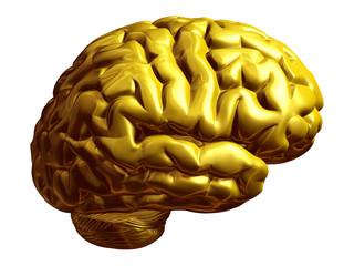 goldenes Gehirn, Seitenansicht
