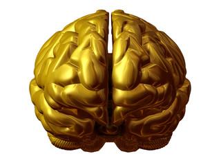 Goldenes Gehirn, Frontansicht