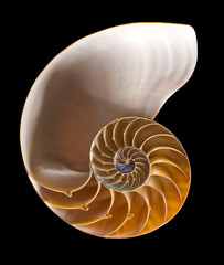 Nautilus shell interior on black, isolated with clipping path