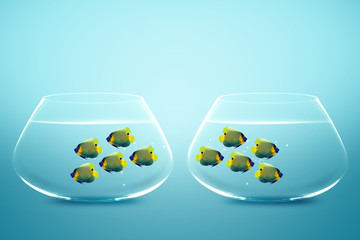 Two group of Enemies angelfish in two fishbowls