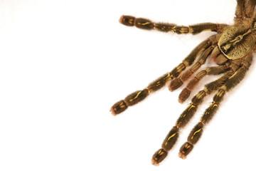 Vogelspinne spinne angst tier terrarium