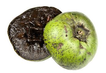 Black sapote or chocolate pudding fruit