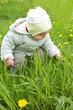 Baby girl and dandelions