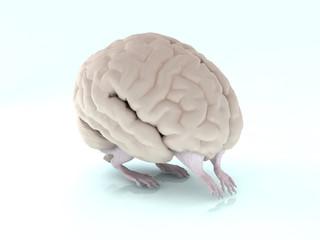 3d brain walking