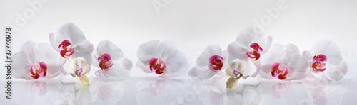 Zdjęcia na płótnie, fototapety, obrazy : Orchideen 2