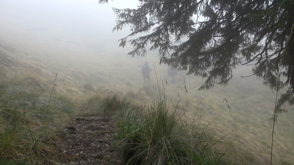 walking in fog at forest