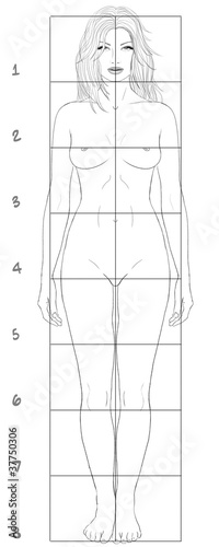 Female basic proportions