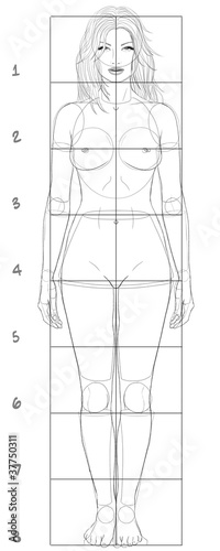 Woman basic proportions