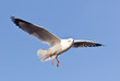 seagull flying on blue sky