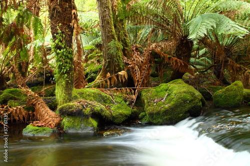 wspanialy-russel-spada-w-tasmania-australia
