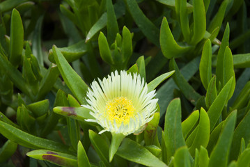 Wild flowers on the Island of Crete in Greece