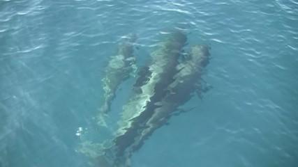 Grupo de ballenas piloto