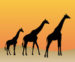 Collection of giraffes silhouette - vector