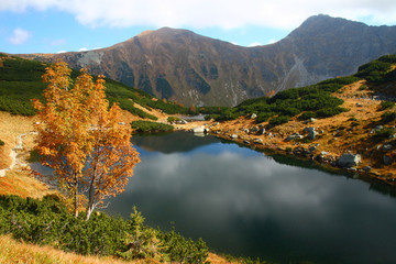 Mountain tarn with a tree