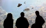 Aquarium spectators poster