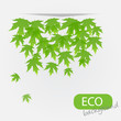eco leves background. vector illustration