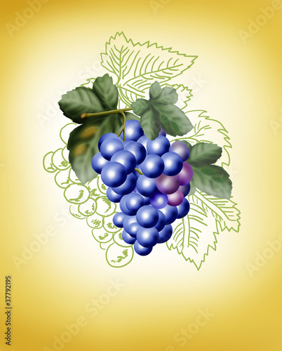 bunch of grapes on a yellow background