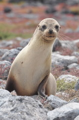 Sea lion sitting