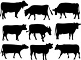 Fototapety Cow silhouette collection - vector
