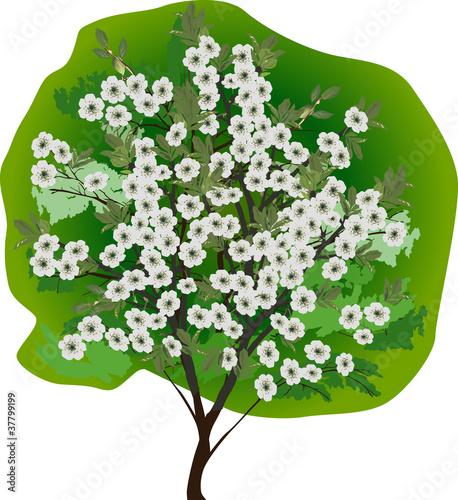 Plakat isolated white flowers tree