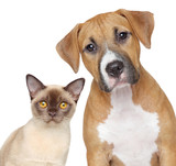 Cat and Dog portrait on a white background - Fine Art prints