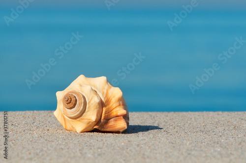 Urlaubsträume, Strandurlaub, Meeresschnecke