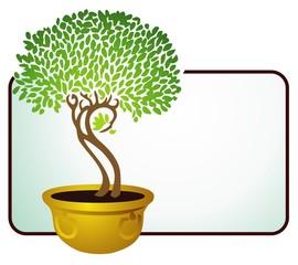 Ficus tree in a brass pot