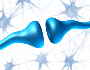 Synapse and Neuron Receptors
