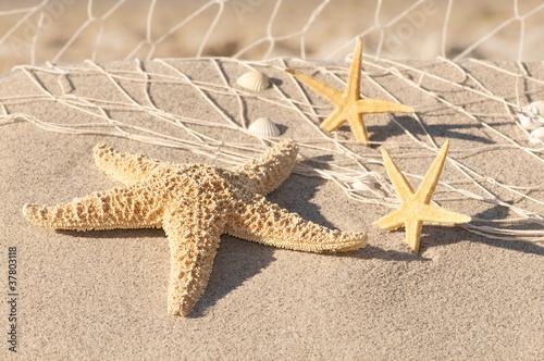 Foto Duschvorhang Nach Maß Konfigurieren: Stillleben Mit Seesternen,  Strandmotiv, Urlaubszeit
