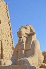 Ram sphinx at Karnak temple