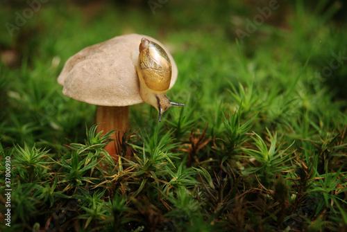 Kleine Schnecke auf einem Pilz