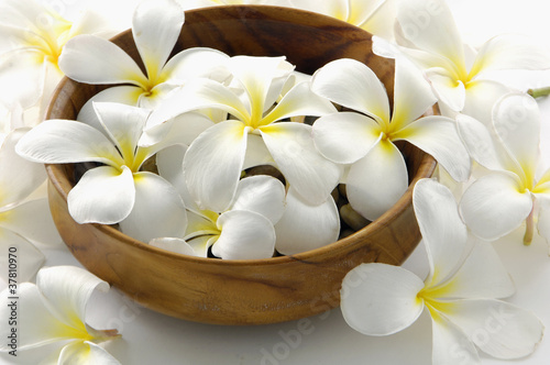 frangipani tropical spa concept