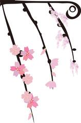 桜の枝 twiggy,cherry brossom