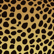 Gepardenfell