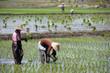 Lago Inle - Myanmar