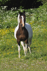 Riding horse sent out to pasture