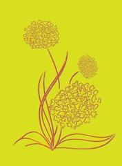 Flowering shallot