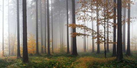 Misty autumn forest after rain
