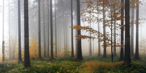 Foto op Plexiglas Bos in mist Misty autumn forest after rain
