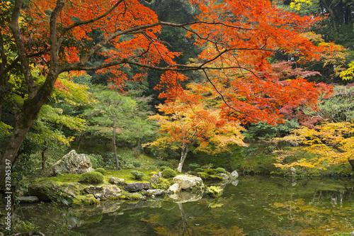Fototapeten,garten,japanese,stille,ruhe