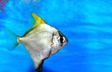 Colorful fish in aquarium saltwater world poster