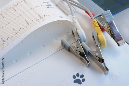 Veterinary ECG with crocodile electrodes