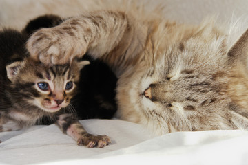 Cat and her newborn kitten