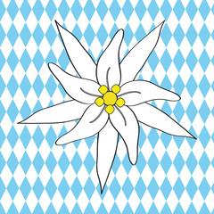 Edelweiss bayerisch
