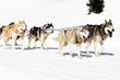dogs walking on the snow
