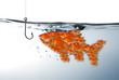 Fischschwarm am Angelhaken