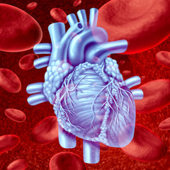 Heart Blood Flow